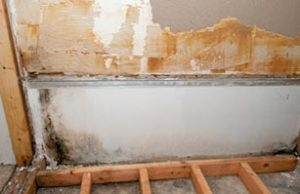 mold damage Johnstown oh