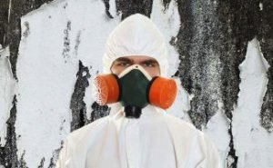 mold removal Powell oh
