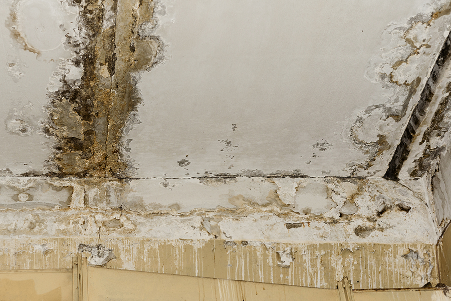 5 Most Common Sites Of Water Damage